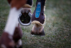 Tendon boots<br /> Illustration photo's <br /> © Dirk Caremans