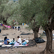 An Afghan family at the olive grove next to Moria camp , Lesvos, Greece.
