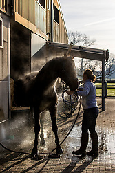 De Brabander Karline<br /> Stal de Muze - Sint Niklaas<br /> © Hippo Foto - Dirk Caremans<br /> 23/11/2020