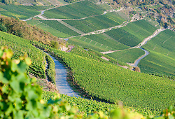 View of  vineyards above Piesport vilage   in Mosel Valley in Germany