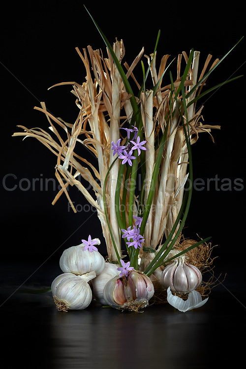 Still life with garlic and savage onion flowers on black background.