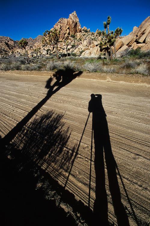 Lost Horse Valley Road, shadow of Pat O'Hara photographing, March, Joshua Tree National Park, California, USA