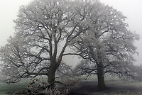 heavy frost and fog at Welcome Hills Stratford upon Avon.photo by Mark Anton Smith