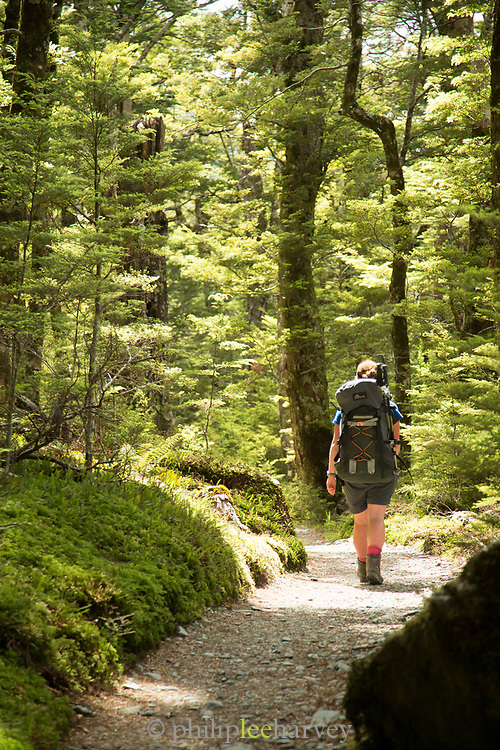 Rear view of a female hiker in a forest at the beginning of the Routeburn Track, Routeburn Shelter, South Island, New Zealand