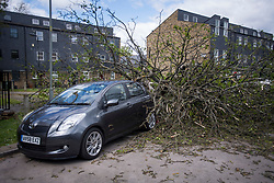 © Licensed to London News Pictures. 04/05/2021. London, UK. A large tree which damaged two cars when it was uprooted by strong winds in Lambeth, South London over night. High winds and heavy rain are affecting large parts of the UK. Photo credit: Ben Cawthra/LNP