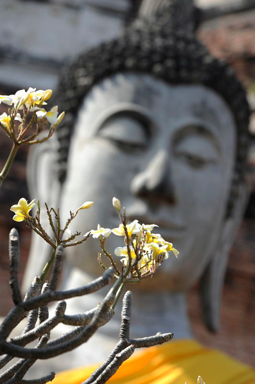 Buddha statue with flowers orange robe