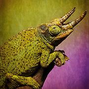 Exotic animal macro workshop photo