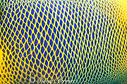 detail of yellowface, yellow-masked, yellowmask, blueface,<br /> yellow-faced, blue-face or blue-faced angelfish, <br /> Pomacanthus xanthometopon, Sipadan Island, off Borneo, Malaysia