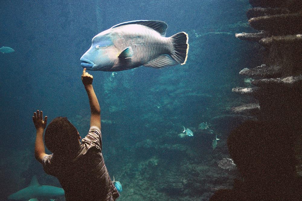 Enfant devant un aquarium de Nausicaä, Centre National de la Mer, Boulogne-sur-Mer, Nord-Pas-de-Calais, France.<br /> Child in front of an aquarium of Nausicaä, National Sea Centre, Boulogne-sur-Mer, Nord-Pas-de-Calais region.