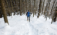 Hiking through forest. Monitoring wolf, lynx and wildcat populations in Velka Fatra National Park during the winter, with Biosphere Expeditions, Slovakia