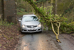 © Licensed to London News Pictures. 21/02/2021.Hereford, Herefordshire, UK. A car squeezes under a fallen tree near Hereford in Herefordshire. Uk.Photo credit: Graham M. Lawrence/LNP