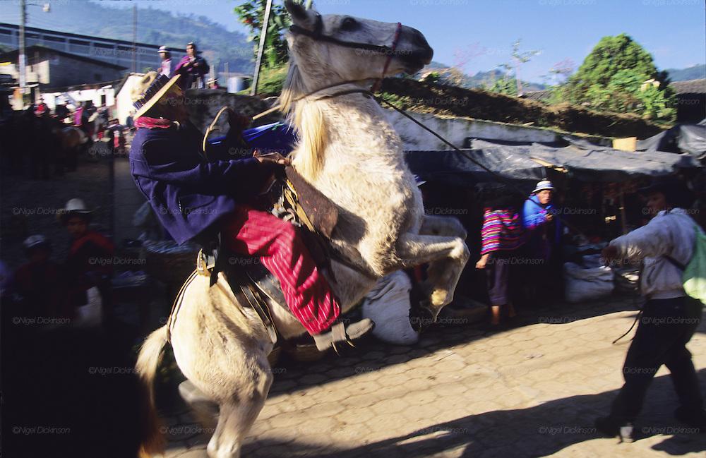 TODOS  SANTOS, Guatemala. Horse rearing in main street. Western Highlands, Huehuetenango, Todos Santos. Mayan traditional festival. Todos Santos Horse Race, the 'Skach Koyl' on All Saints Day 1st November; the 'Day of the dead' November 2nd. Mayan dances about Spanish 'Conquistadores' and Mayan Spirits, accompanied by marimbas take place October 31st.