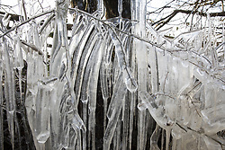 Harefield, UK. 13th February, 2021. Icicles formed on the branches of a tree are pictured in the Colne Valley. The current cold spell is expected to be replaced by milder conditions after tomorrow.