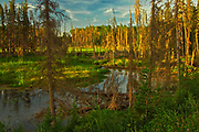 Wetland at sunset. Boreal forest.<br />