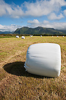 Hay bale on freshly cut field, Gimsøya, Lofoten islands, Norway