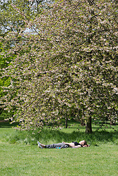 © Licensed to London News Pictures. 12/05/2016. LONDON, UK.  A woman relaxes under a tree during warm sunny weather in Green Park at lunchtime.  Photo credit: Vickie Flores/LNP