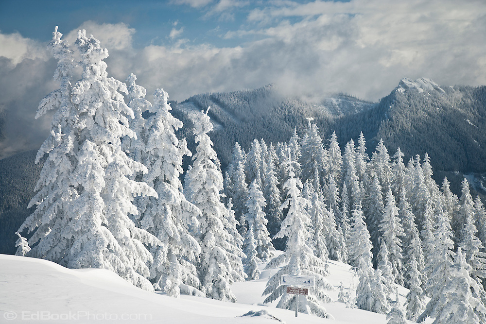 Winter new snow along the Ben Jones Trail with Sawtooth Ridge in the distance viewed from High Hut of the Mount Tahoma Trails non-profit hut-to-hut crosscountry and snowshoe trail system in the Washington state Cascade Mountain Range near Mount Rainier, USA.