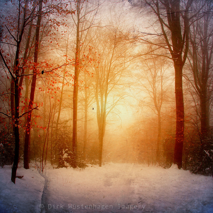 misty winter morning in a snow covered forest. the low rising sun created a dreamy atmosphere.<br /> Prints: http://society6.com/DirkWuestenhagenImagery/warm-wintEr-glOw_Print<br /> <br /> License this through Getty Images:<br /> http://www.gettyimages.com/detail/photo/forest-royalty-free-image/134024366?esource=en-us_flickr_photo&language=en-US