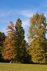 Trees in autumn.   (Photo by: Vid Ponikvar / Sportal Images).