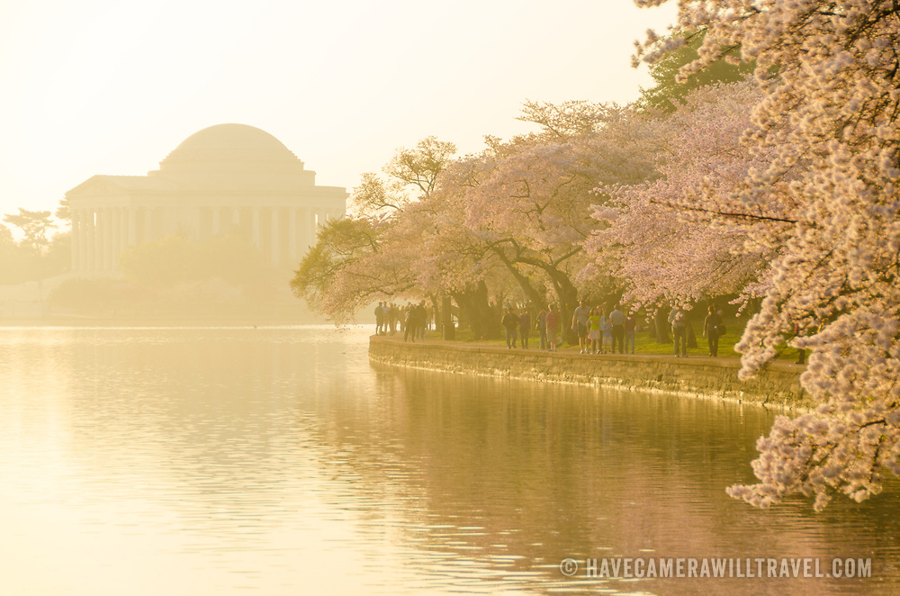 The sun catches a haze on the Tidal Basin, with the Jefferson Memorial at left and the cherry blossoms in bloom at right. The Yoshino Cherry Blossom trees lining the Tidal Basin in Washington DC bloom each early spring. Some of the original trees from the original planting 100 years ago (in 2012) are still alive and flowering. Because of heatwave conditions extending across much of the North American continent and an unusually warm winter in the Washington DC region, the 2012 peak bloom came earlier than usual.