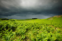 Dark storm clouds over Bradgate Country Park, Leicestershire, England, UK.