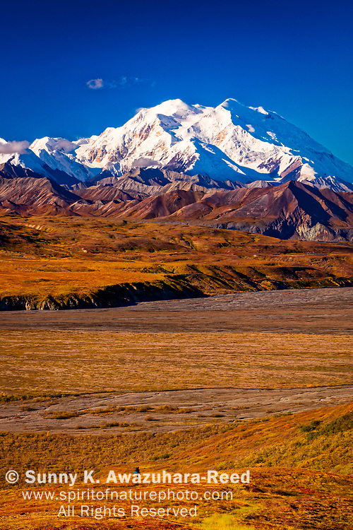 View of Mount Denali (McKinley) and Muldrow Glacier, from Eielson Visitor Center. A hiker on fall color tundra hill. Denali National Park & Preserve, Alaska, Autumn. Vertical image.