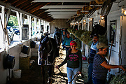 47905 Louisville, Ky. - Stable hands make their way around the stables walking with racehorses at Roman's Racing Stables on the backside of Churchill Downs on Tuesday April 25, 2017.<br /> <br /> CREDIT: William DeShazer for The Wall Street Journal