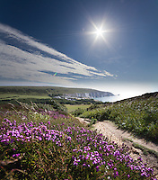 Heather in bloom on Headon Warren looking towards Alum Bay and the Needles, Isle of Wight.<br /> <br /> Created from two frames shot with the Sigma 10-20mm. Foreground shot at f4.0 1/500 with a narrower aperture used for the sunburst.<br /> <br /> Part of the Ocean Seen - Oceanic Photography Exhibition.<br /> <br /> Sponsored by Wightlink - Dimbola Museum & Galleries, Freshwater Bay, Isle of Wight - 29th June to 2nd September 2012.<br /> <br /> A collaborative summer show, bringing together three great oceanic photographers to celebrate the way we interact with our great British coastline.