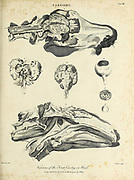Viscera of the First Cavity or Head of a horse Copperplate engraving From the Encyclopaedia Londinensis or, Universal dictionary of arts, sciences, and literature; Volume VII;  Edited by Wilkes, John. Published in London in 1810
