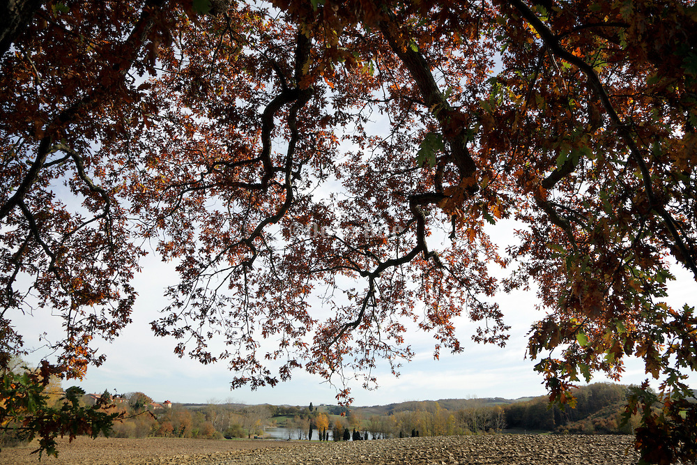 landscape from under the crown of a big oak tree during autumn season