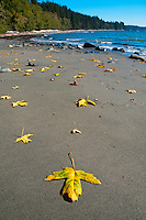 Sandcut beach trail, part of the Juan de Fuca trail on the West Coast of Vancouver Island, is a sandy protected beach