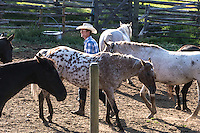 Cowboy wearing white hat and blue checked shirt leads an Appaloosa riding horse in corral between other horses, in early morning sunshine, Spring Lake Ranch, BC, Canada