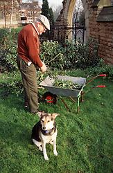 Elderly man gardening with company of pet dog,