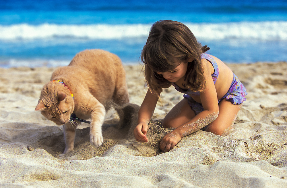3 year old girl & cat digging in sand together on beach *****Property Release available