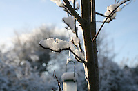 Snow on a tree in Dublin Ireland