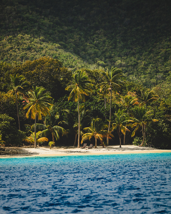 Palm trees lining the sandy beaches of Great Thatch Island in the BVI's.