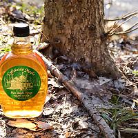 Creekside Maple