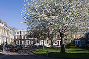 Hannover Square, Kennington SW8, with spring blossom and parked cars.