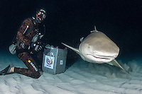 Lemon Shark and Diver, nighttime<br /> Shot in Bahamas