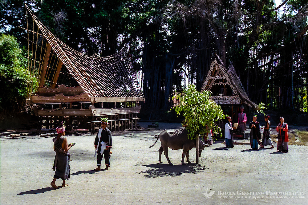 Indonesia, Sumatra. Samosir. Simanindo on the northern tip of Samosir is the cultural center of Samosir, with a museum. Batak dance performance.