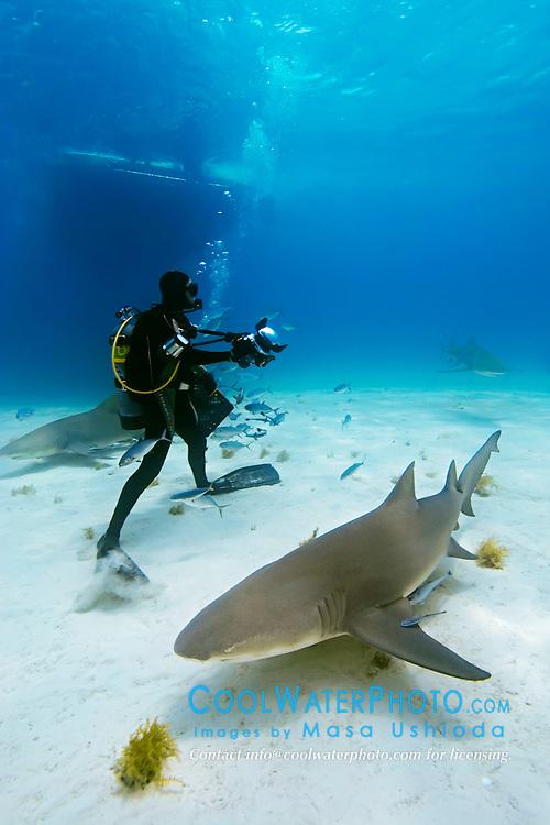 Lemon Sharks, Negaprion brevirostris, scuba diver, and boat, West End, Grand Bahama, Atlantic Ocean