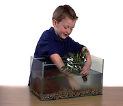 Young Boy putting plants in fish tank, aged 11 years old, studio, white background, cut out, freshwater, coldwater