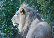Cincinnati, Zoo, Ohio