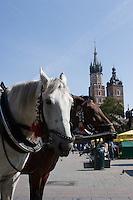 Horse Carriage on the Rynek in Krakow Poland