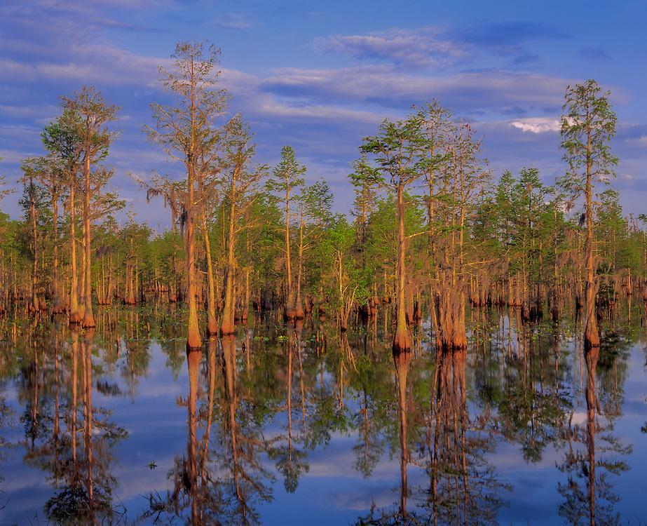 Cypress trees & reflections, blue sky & clouds, Stephen Foster State Park, Okefenokee National Wildlife Refuge, Okefenoke, GA