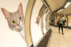 A passenger passes some of over 60 adverts in Clapham Common underground station, London, which have been replaced with pictures of cats as part of the ÔCitizens Advertising Takeover Service, which aims to create a peaceful, unbranded space in the heart of London, free from commercial advertising.