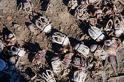 Interesting Pattern of Dead Bugs