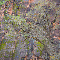 The colors of spring emerge deep in the heart of Zion National Park.