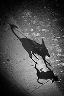 France. Paris. 4th district. dog shadows rue vielle du temple in le marais