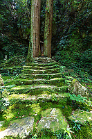 Namikiri Fudo-son Temple is located in the south of Tokushima Prefecture. Although it's a small temple,  the grounds are covered with moss,it feels like it is in another world.  It appears to be a scene from the mossy island of Yakushima. At the top of the mossy steps are two huge cedars trees, said to have been planted by Kobo Daishi to help support the giant stone at the top of the hill.